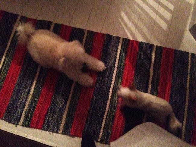 Ester och Mini.