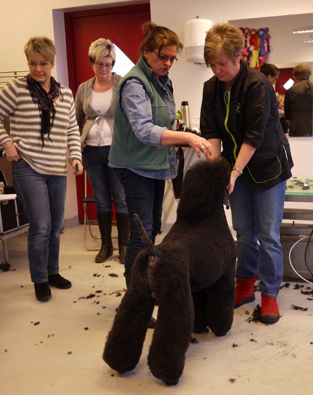 Lena Jönsson visar Pudel.